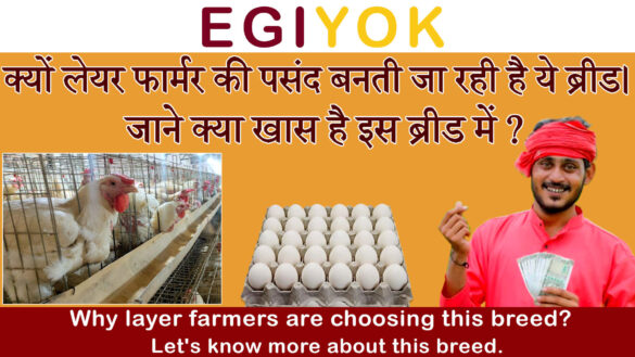 layer poultry farmers